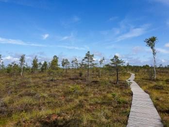 Estonia road trip - bog walk