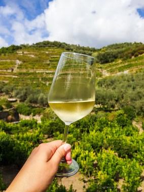 Italy - Cinque Terre winery