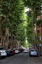 Pretty Madrid - greenery