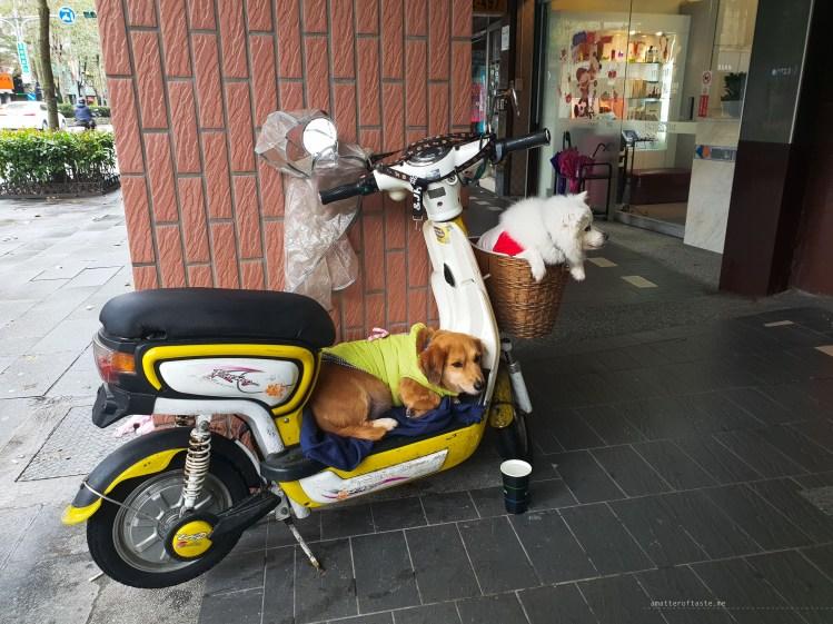 Taiwan dogs on a motorbike