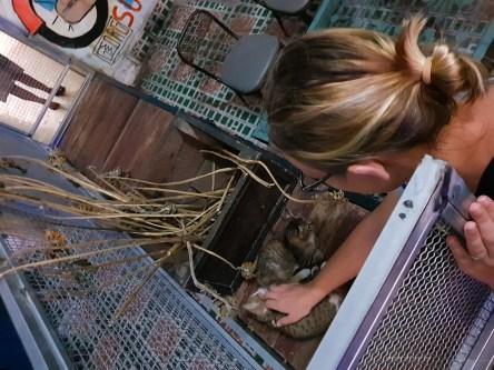 hidden bar hcmc saigon kittens