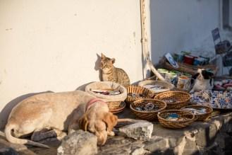 pyrgos-cats-dogs-santorini