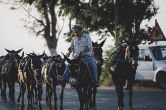 pyrgos-donkeys-santorini