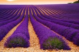 Plateau de Valensole, Provence, Francie.