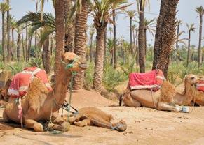 Excursión al palmeral de Marrakech