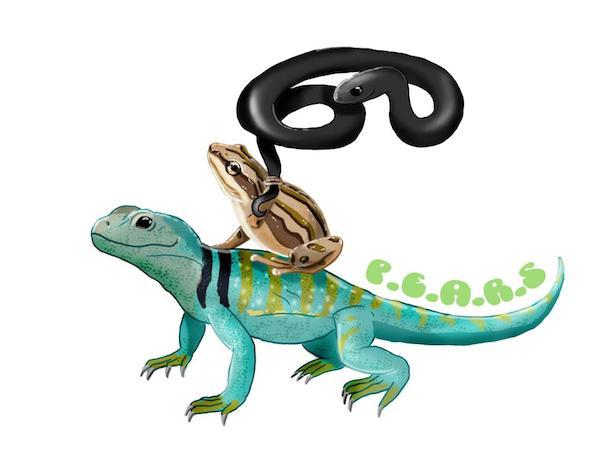 reptil amfibi
