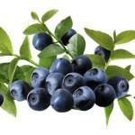 8 Manfaat Kesehatan Bilberry, dari Mata hingga Jantung