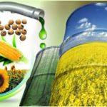 Alternatif Solar: Inilah Kelebihan & Kekurangan Biodiesel