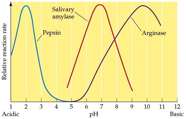 Bekerja Pada Substrat Apakah Enzim Ptialin Pepsin Dan ...