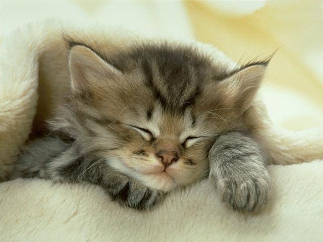 6 Cara Alami Mengobati Kutu Kucing Tanpa Ke Dokter Hewan
