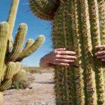8 Fakta Menarik tentang Kaktus yang Perlu Anda Ketahui