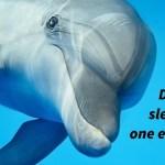 Fakta & Informasi tentang Cara Tidur Lumba-Lumba
