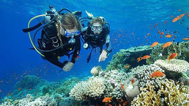 fakta scuba diving