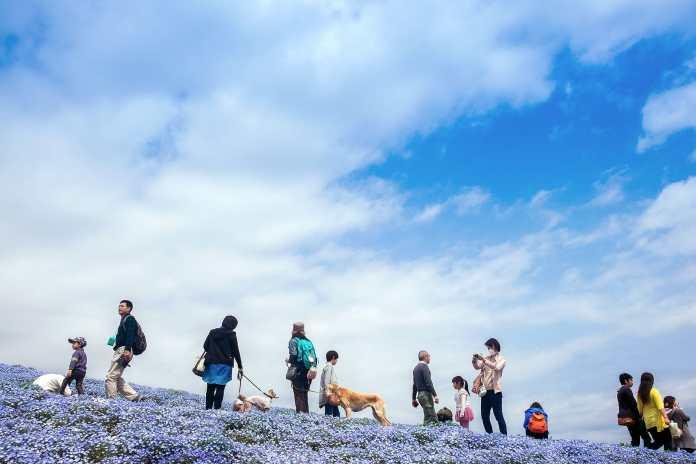 Hitashi seaside park (25)