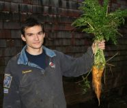 Happy carrots grown with our Chicken Gold