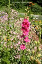 flower-susan-lindquist3