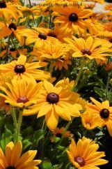 flower-susan-lindquist6