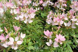 flower-susan-lindquist7