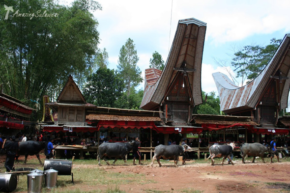 Top10 Biggest Attractions In Sulawesi