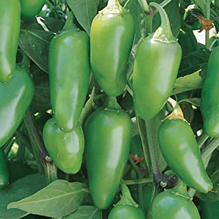 Burpee Jalapeno Early Hot Pepper, 125 seeds