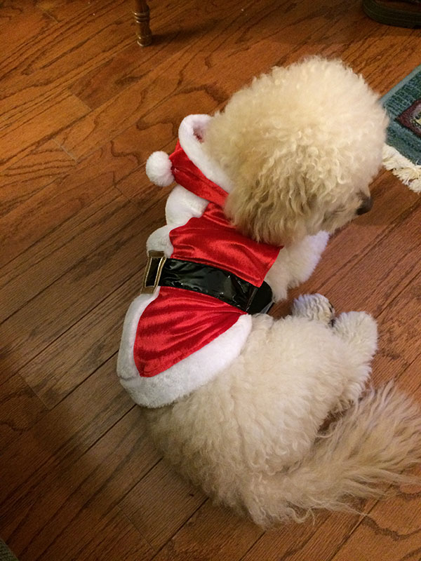 Oliver's Travels: Home for the Holidays