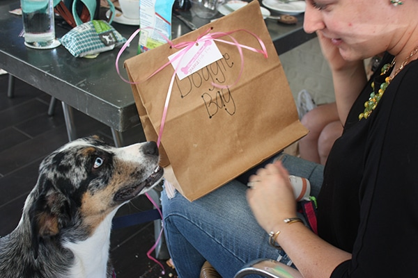 Doggie bags from Doggies Who Brunch in Houston, TX