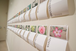 November 10th, 2016 Tea Project Performances and gallery