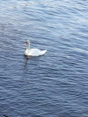 caico new hope ducks (7)