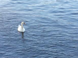 caico new hope ducks (8)