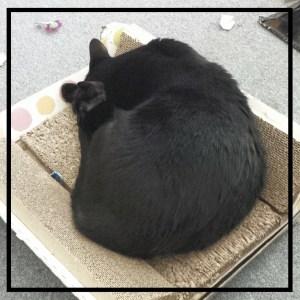 amberunmasked.com cat
