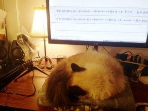 amberunmasked.com Caico cat