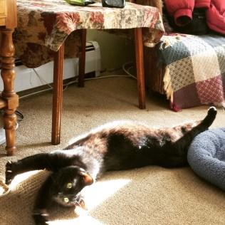 Gus stretching