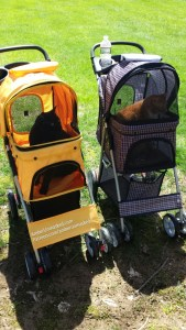 Cats in strollers
