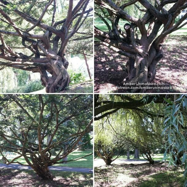 romy yoga immersion training trees