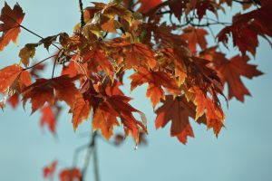 5 Tips to Prepare Your A/C Unit for Fall