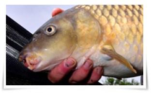 Photo of Crean redes de pesca antibacterianas para combatir enfermedades en los peces.