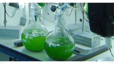 Photo of Sostenibilidad de las algas como fuente de energía
