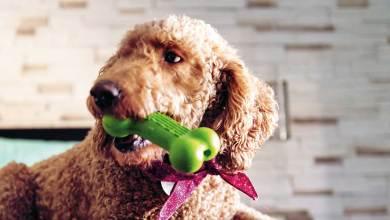 Photo of Un juguete estético para perros