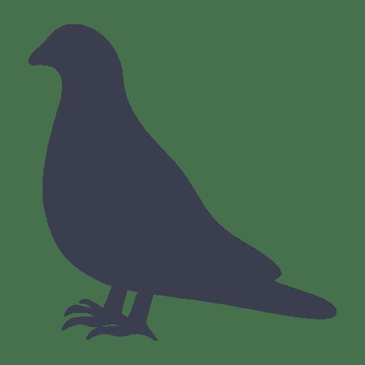 Control de aves: Palomas