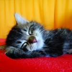 10 amazing health benefits of sleep