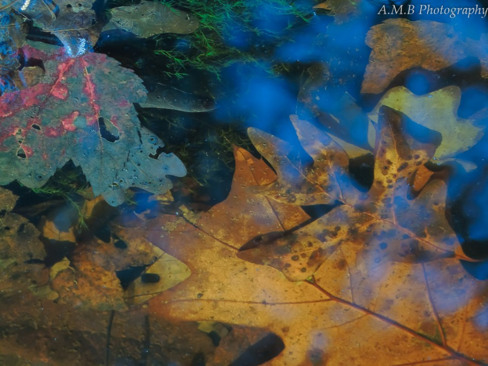A macro image of a creek and the fall leaves at the bottom, highlighted with the blue reflection of the sky.