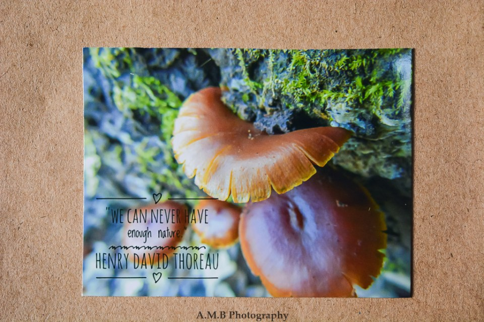"""Nature photo magnet """"Top Step"""" with a quote from Henry David Thoreau, """"We can never have enough nature."""""""