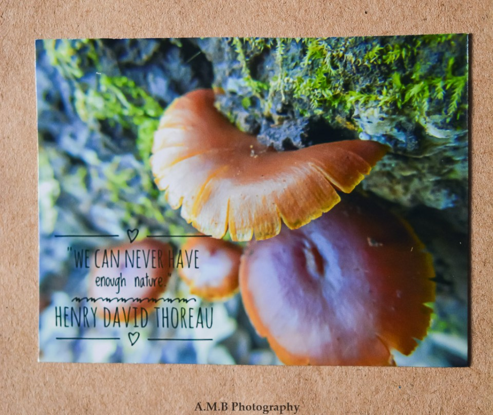 "Nature photo magnet ""Top Step"" with a quote from Henry David Thoreau, ""We can never have enough nature."""