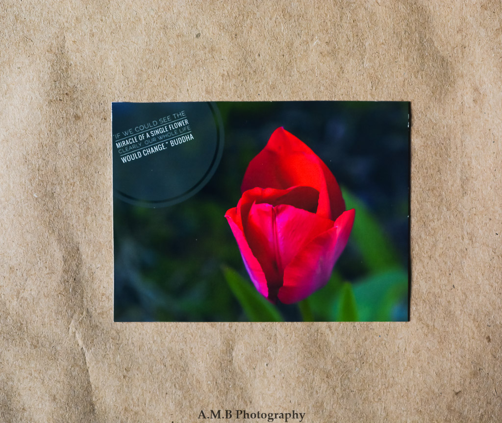 nature photo magnet nature quotes red tulip miracle of a flower