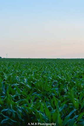 A windmill on the horizon hints at the gradual changes occuring on the Illinois prairie/farmland. Some have decided to take advantage of the nearly constant windy conditions of the area.