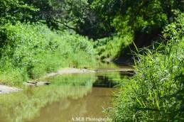 Lovely green grass alongside Jubilee Creek near Peoria, Illinois. Captured the Summer of 2017.