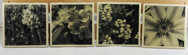 Set of 4 Black and White Blooms 2 Coasters featuring a series of Spring and Summer blooms in my home gardens.