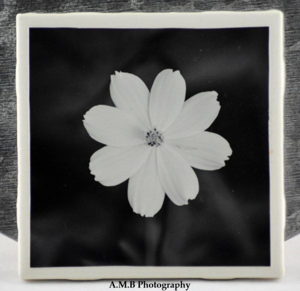 1 from the set of 4 Black and White Bloom Coasters featuring a series of images highlighting Summer blooms at our home in Dana, Illinois from 2018. Coasters designed and made in the Fall of 2018.