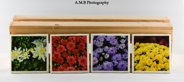 Set of 4 Blooming Mums Coasters featuring a series of images highlighting Late Summer mums blooming at our home in Dana, Illinois in 2017. Coasters designed and made in the Fall of 2018.