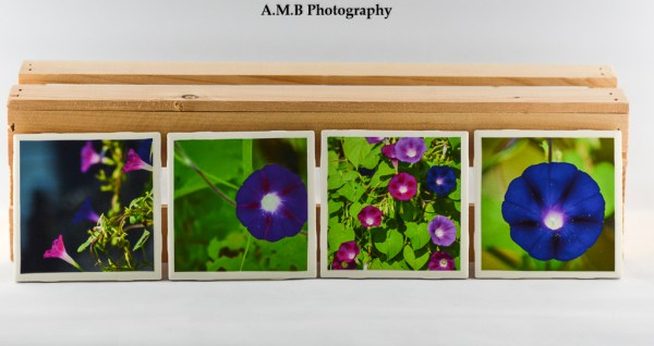 Set of 4 Morning Glory Coasters featuring a series of images highlighting morning glories growing at our house in Peoria, Illinois in the Fall of 2018. Coasters designed and made in the Fall of 2018.